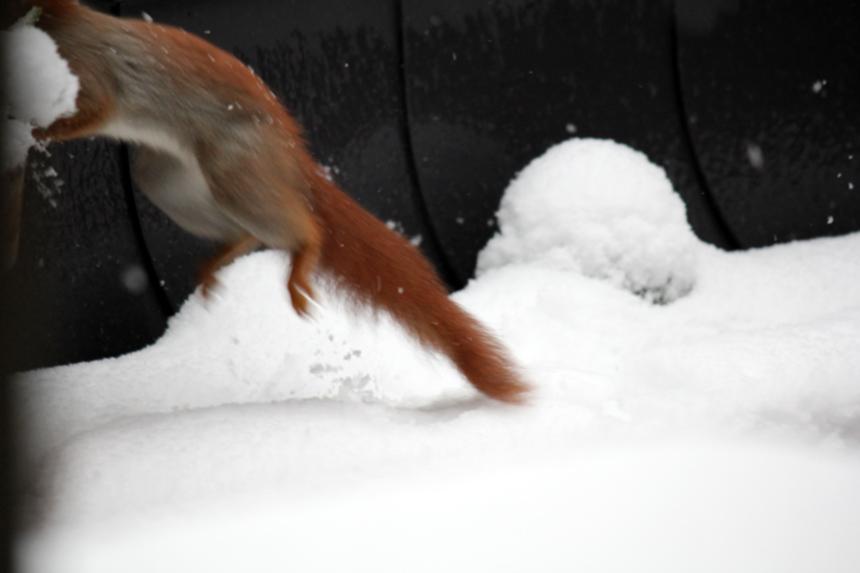 Schneesprung