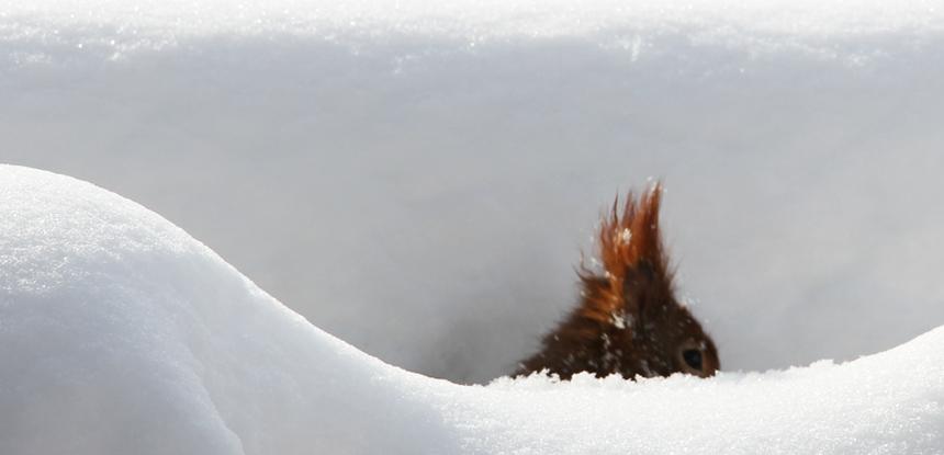 tiefer Schnee